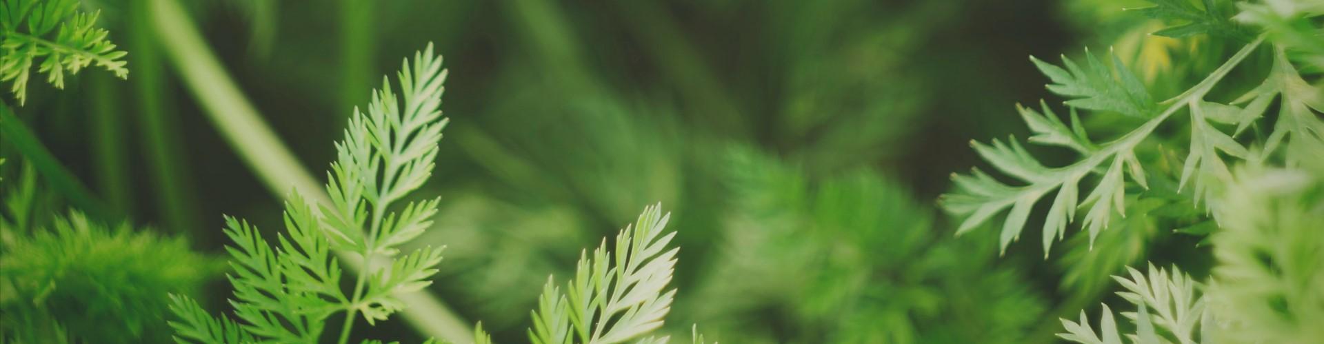 Wreaths and Garlands - Alpha Fern