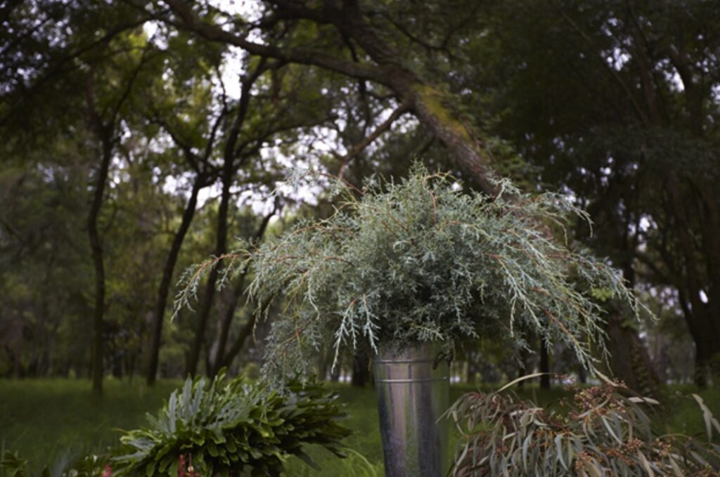 Floral Greenery in Metal Vase Outside