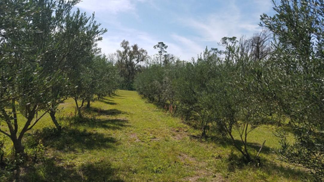 Alpha Fern - Rows of Trees Outside