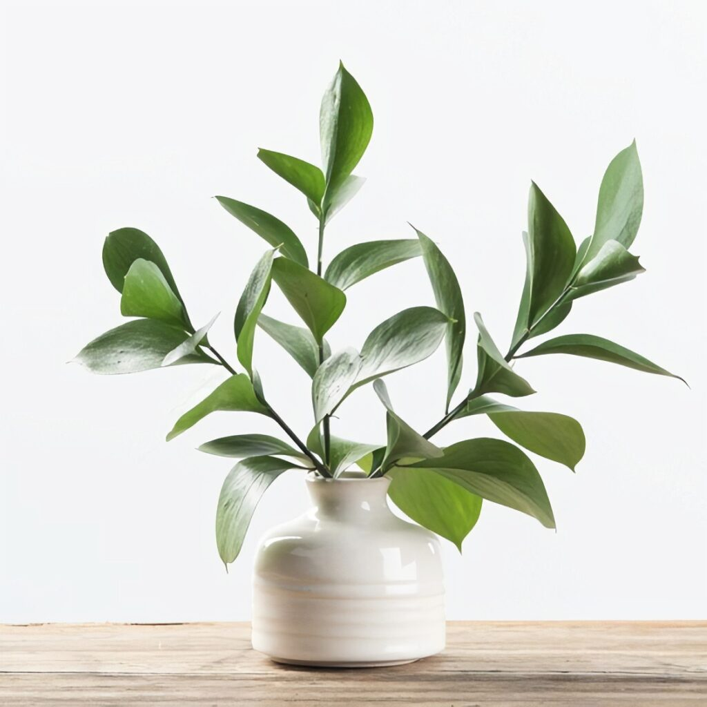 Florida Ruscus in a small white vase