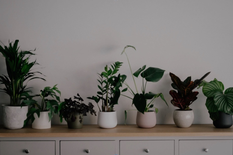 Line of small plants on a dresser