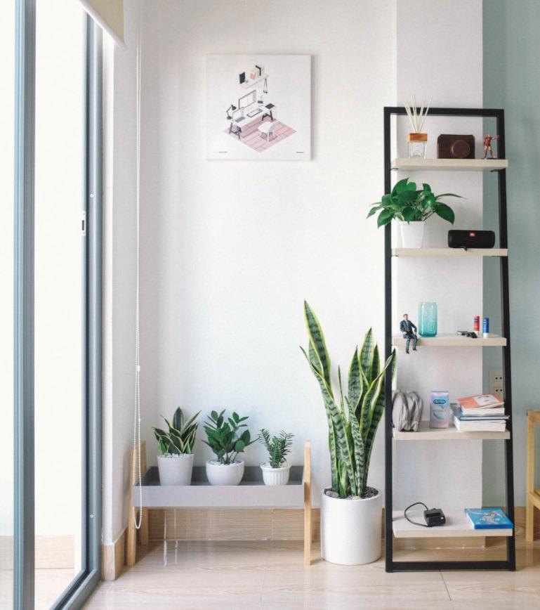 Indoor plants next to shelf